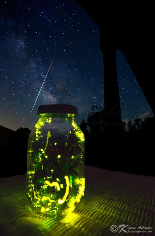 fireflies light the sky. Black Bedroom Furniture Sets. Home Design Ideas