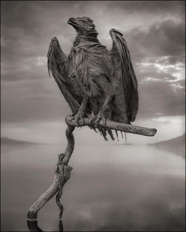 Calcified-Fish-Eagle-640x800.jpg