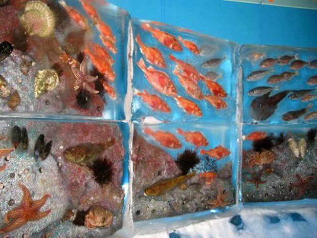 An aquarium on ice for How to make ice in a fish tank