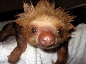 photo How to Bathe a Hedgehog