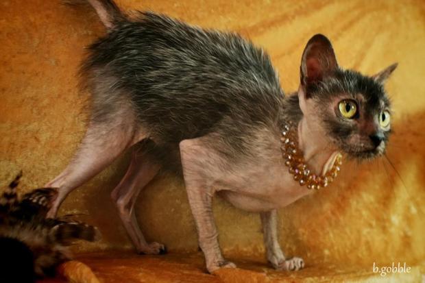 сфинкс кот приколы