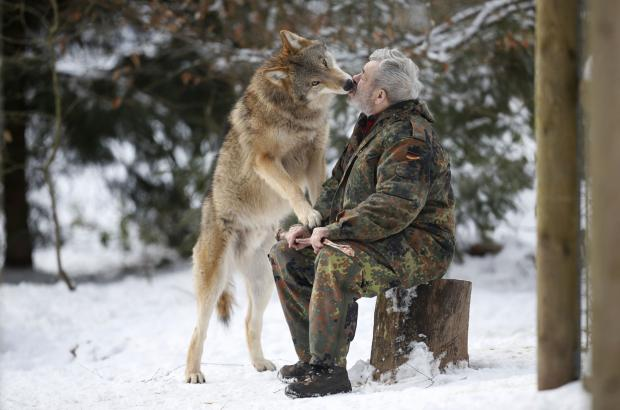 1051433 also Index php also New Study Finds Dogs Were Domesticated From Grey Wolves In Europe likewise Article3356676 besides 3. on study finds human dna in dogs